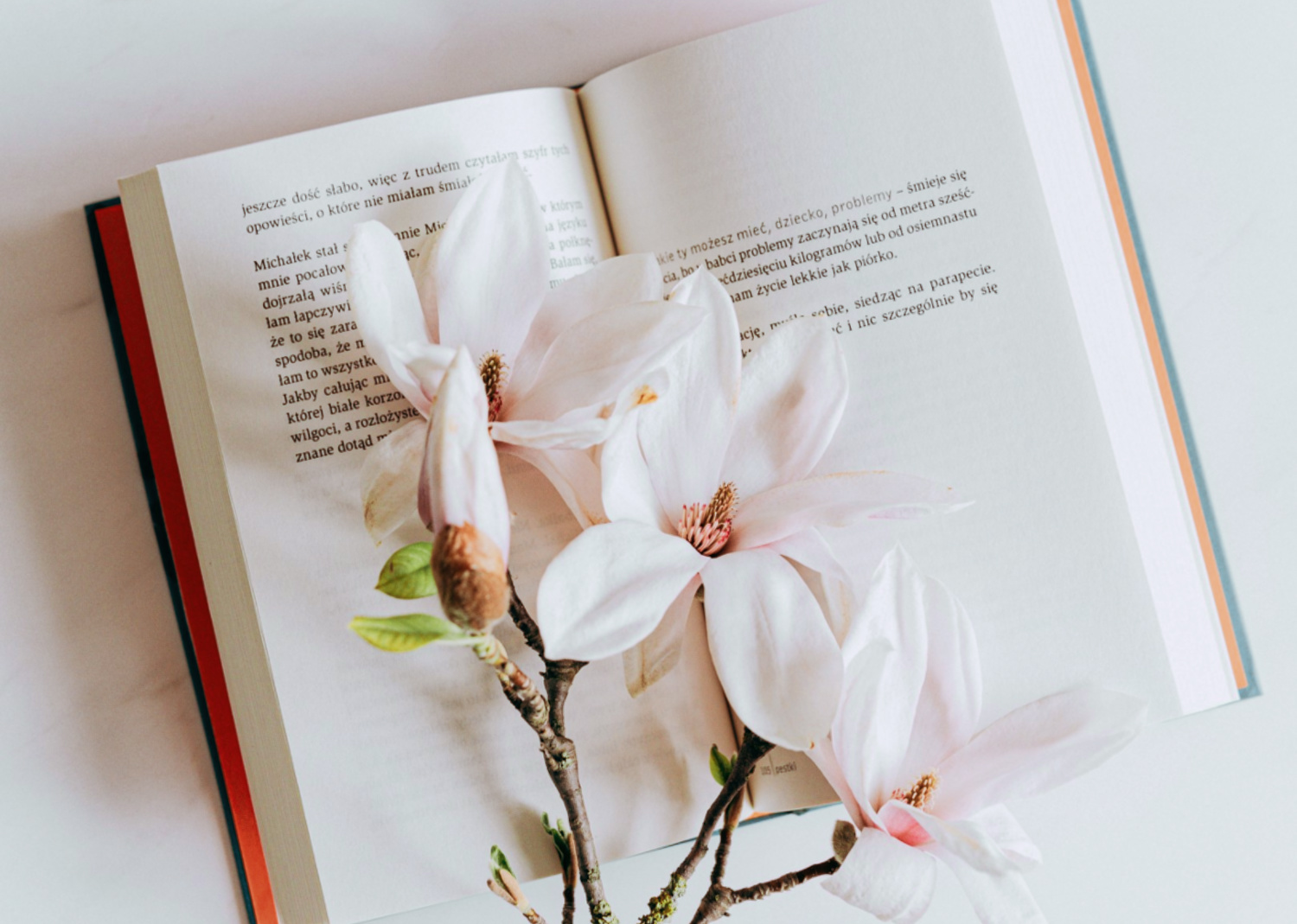 This isn't quite what we meant by a 'PETAL' paragraph, but I thought that the image worked well anyway!